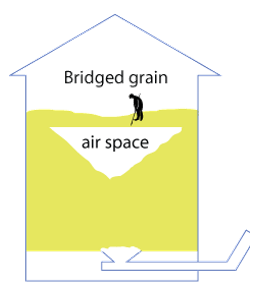 bridged grain graphic